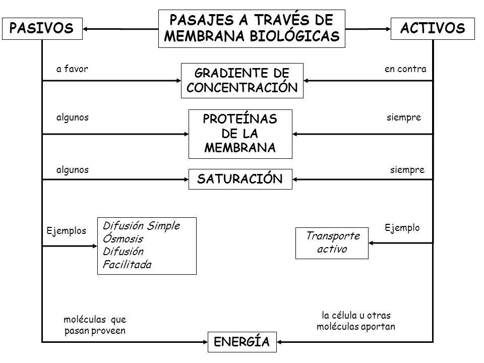 PASAJES A TRAVÉS DE MEMBRANA BIOLÓGICAS PASIVOS ACTIVOS