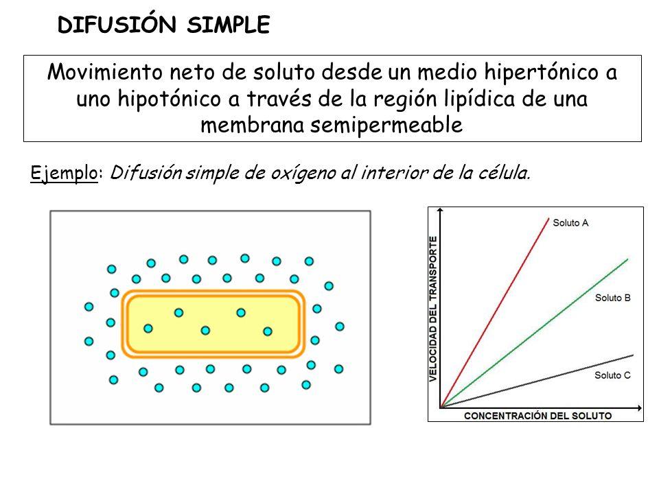 DIFUSIÓN SIMPLE Movimiento neto de soluto desde un medio hipertónico a uno hipotónico a través de la región lipídica de una membrana semipermeable.