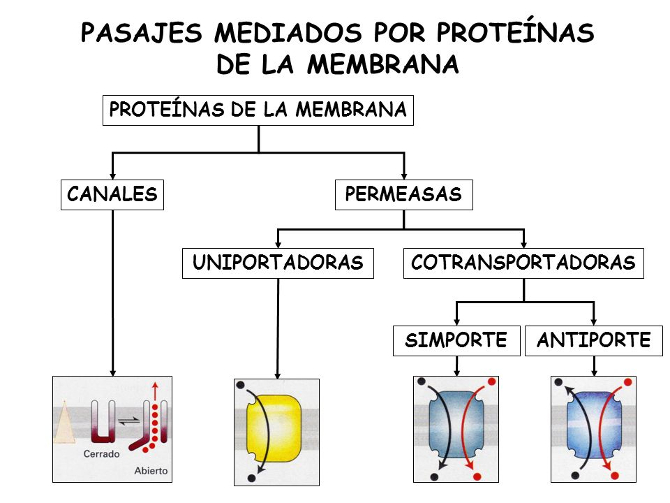PASAJES MEDIADOS POR PROTEÍNAS DE LA MEMBRANA