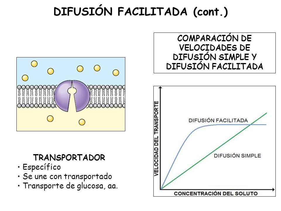 DIFUSIÓN FACILITADA (cont.)
