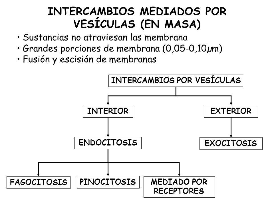 INTERCAMBIOS MEDIADOS POR VESÍCULAS (EN MASA) MEDIADO POR RECEPTORES