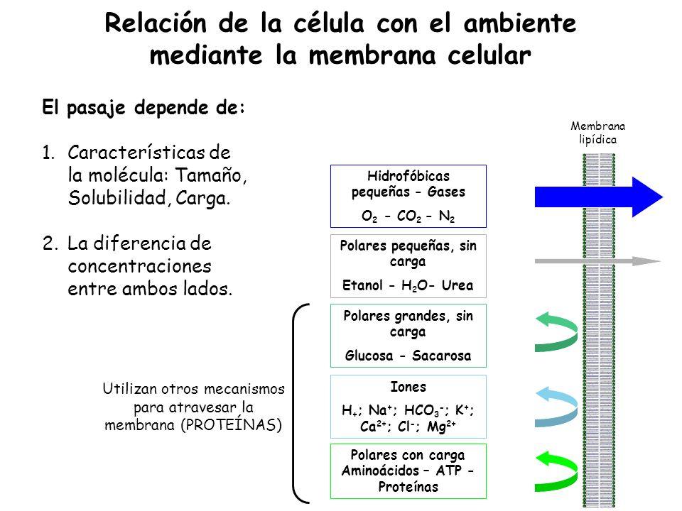 Relación de la célula con el ambiente mediante la membrana celular