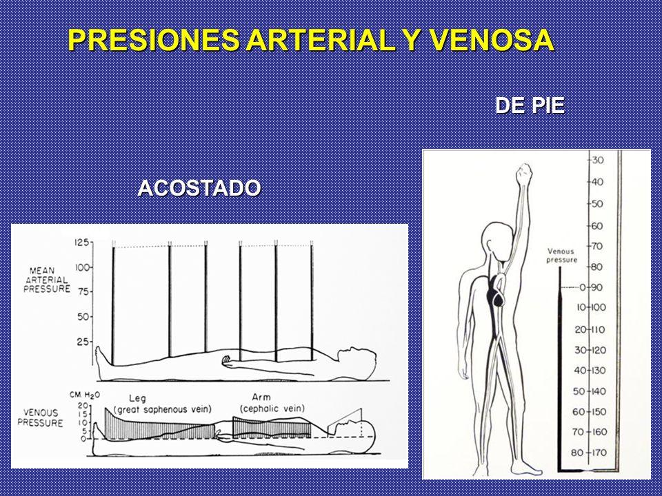 PRESIONES ARTERIAL Y VENOSA