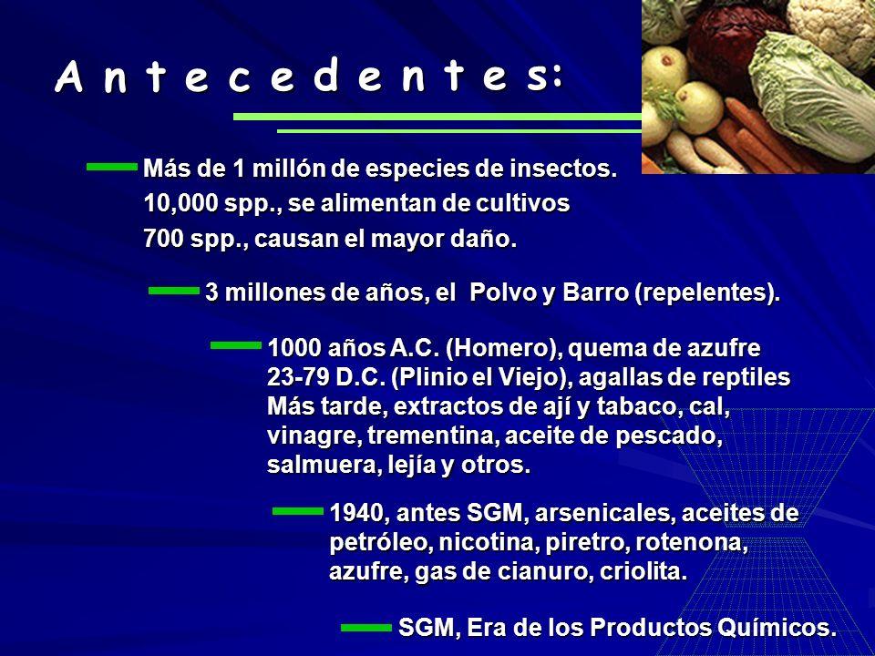 A n t e c e d e n t e s: Más de 1 millón de especies de insectos.