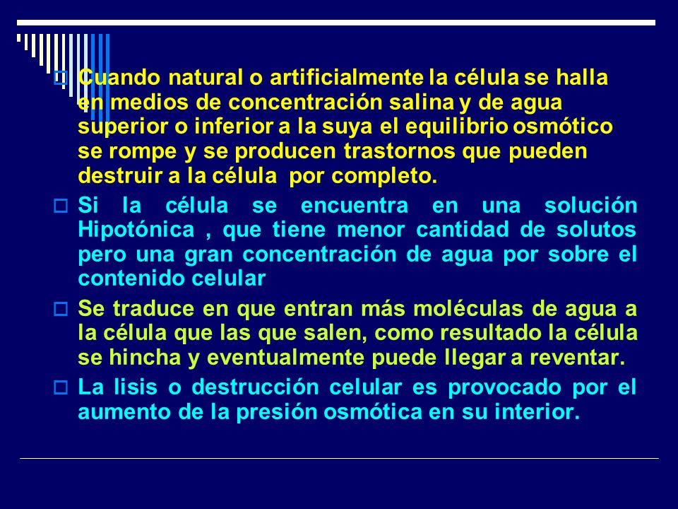 Cuando natural o artificialmente la célula se halla en medios de concentración salina y de agua superior o inferior a la suya el equilibrio osmótico se rompe y se producen trastornos que pueden destruir a la célula por completo.