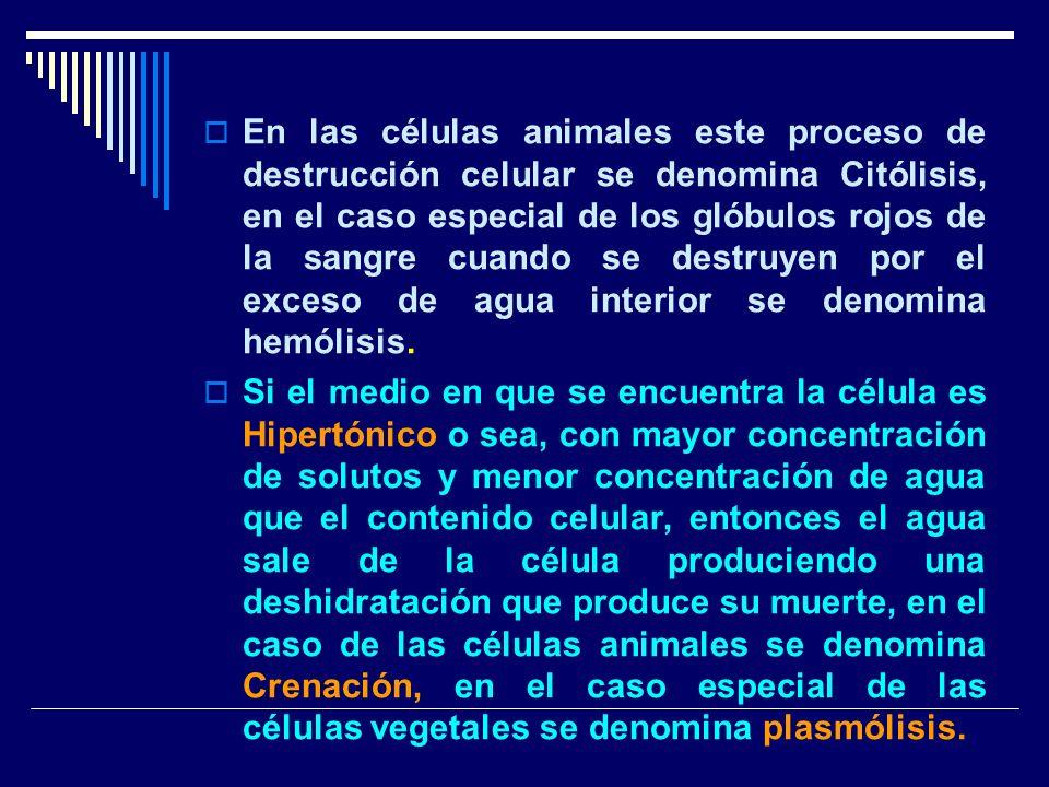 En las células animales este proceso de destrucción celular se denomina Citólisis, en el caso especial de los glóbulos rojos de la sangre cuando se destruyen por el exceso de agua interior se denomina hemólisis.