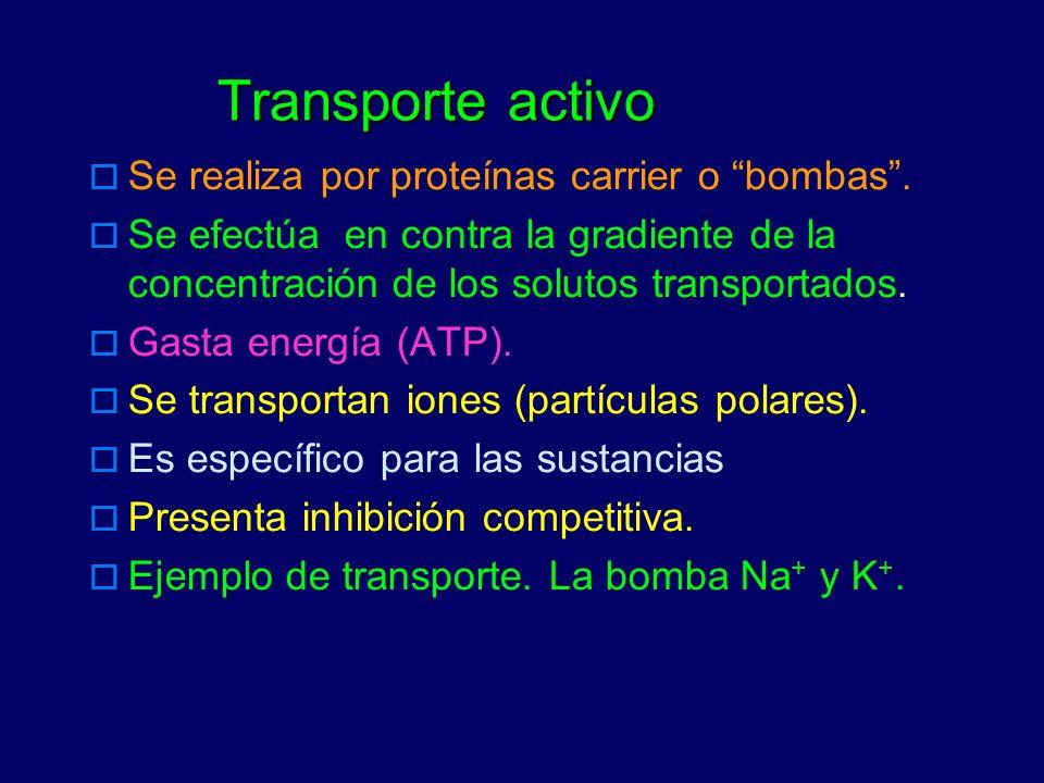 Transporte activo Se realiza por proteínas carrier o bombas .