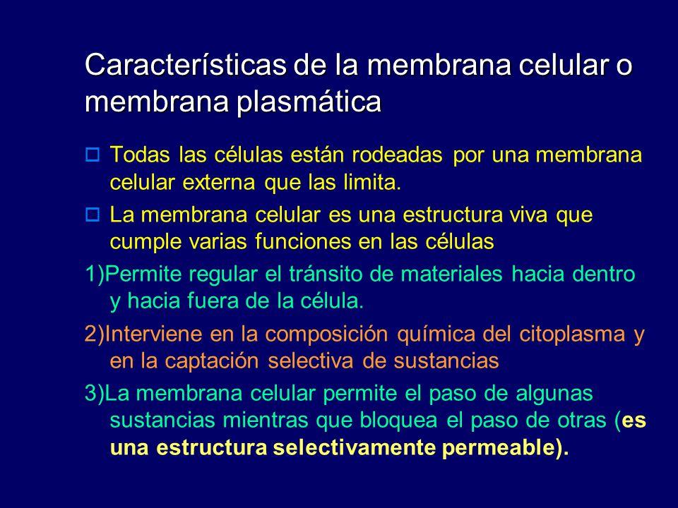 Características de la membrana celular o membrana plasmática