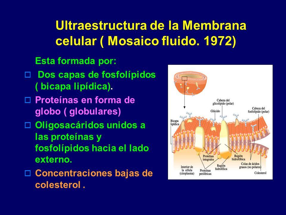 Ultraestructura de la Membrana celular ( Mosaico fluido. 1972)
