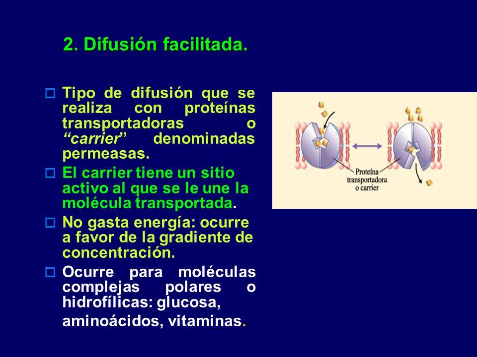 2. Difusión facilitada. Tipo de difusión que se realiza con proteínas transportadoras o carrier denominadas permeasas.