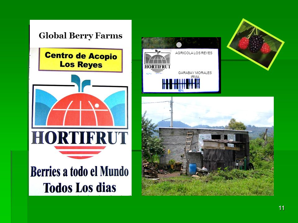 Global Berry Farms AGRICOLA LOS REYES GARABAY MORALES IRMA