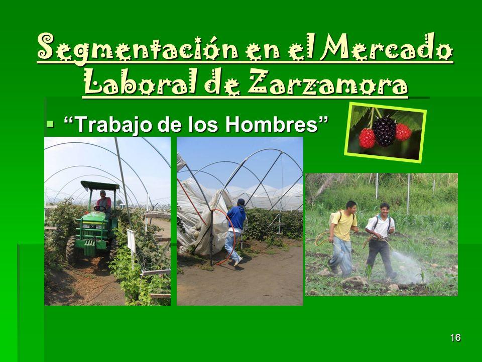 Segmentación en el Mercado Laboral de Zarzamora