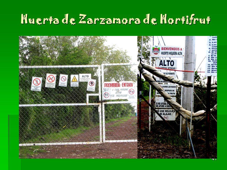 Huerta de Zarzamora de Hortifrut