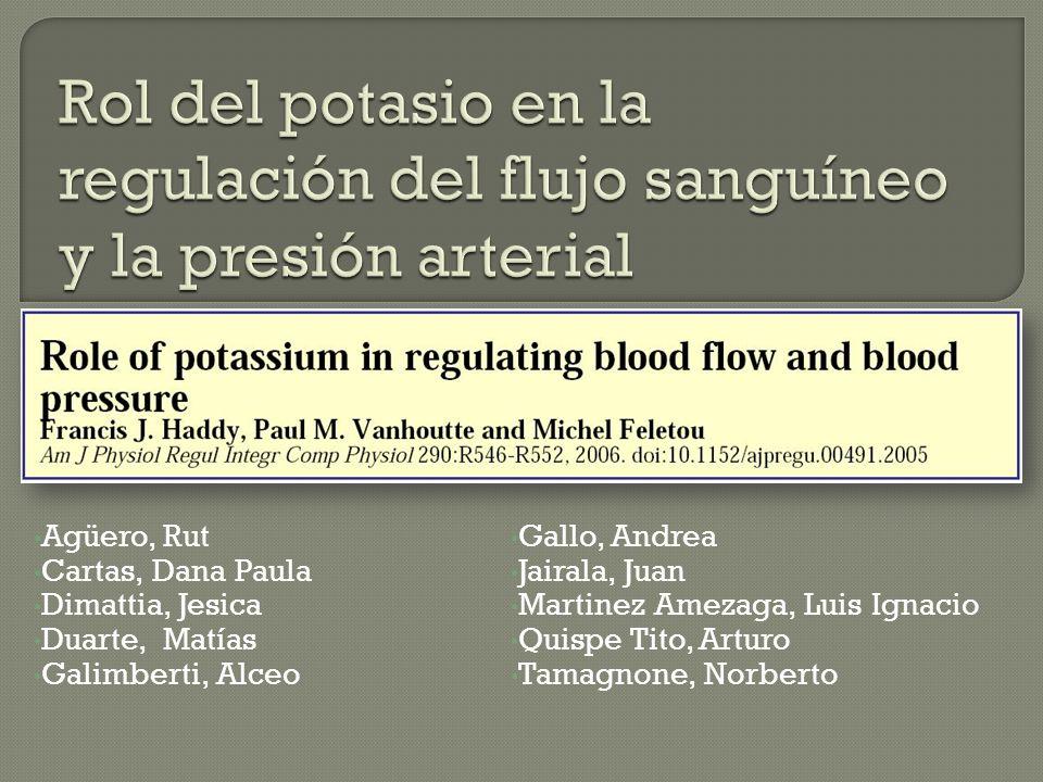 Rol del potasio en la regulación del flujo sanguíneo y la presión arterial