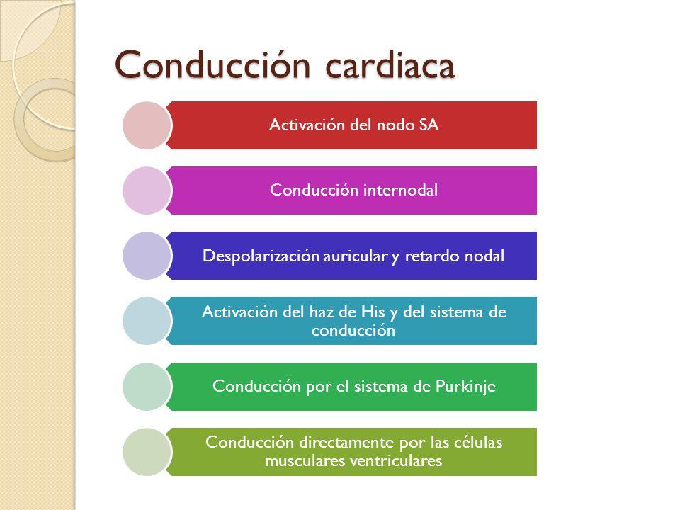 Conducción cardiaca Activación del nodo SA Conducción internodal