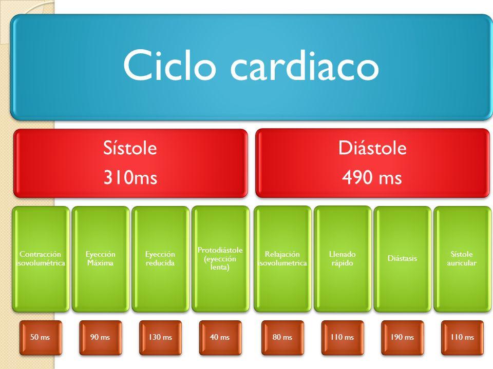 Ciclo cardiaco Sístole 310ms Diástole 490 ms