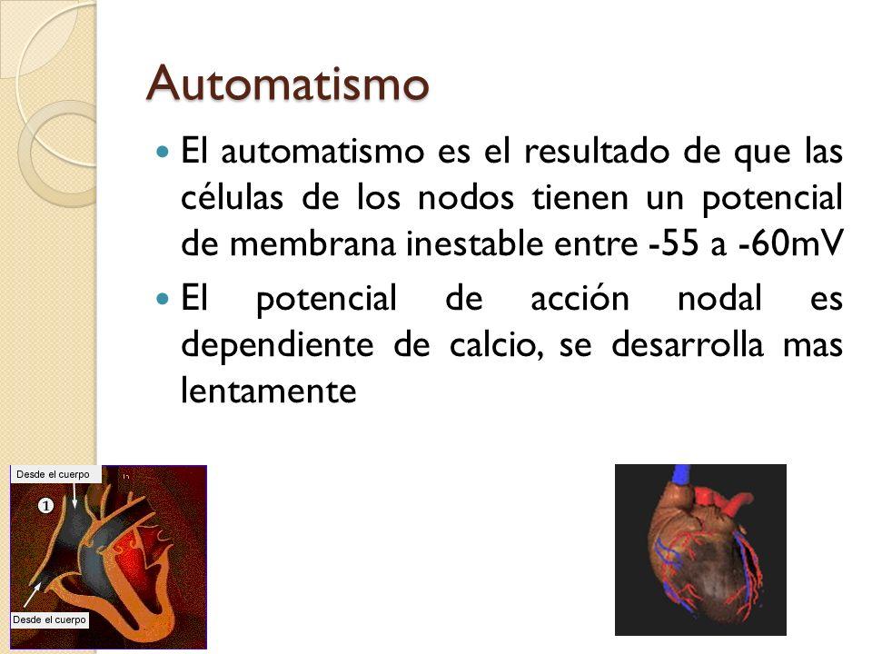 Automatismo El automatismo es el resultado de que las células de los nodos tienen un potencial de membrana inestable entre -55 a -60mV.