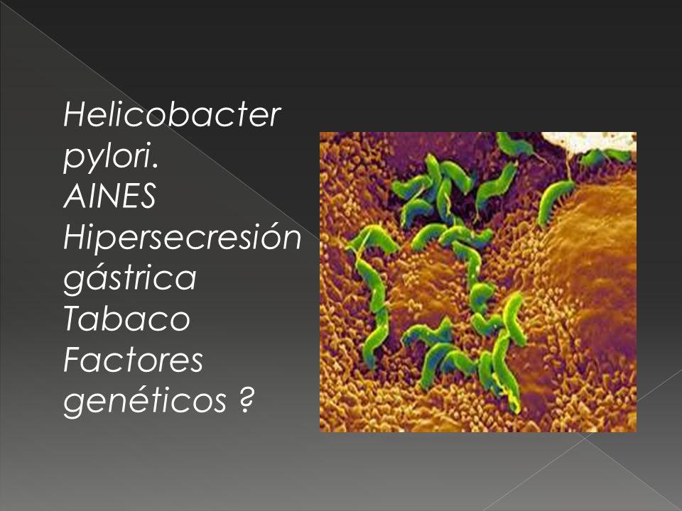 Helicobacter pylori. AINES Hipersecresión gástrica Tabaco Factores genéticos