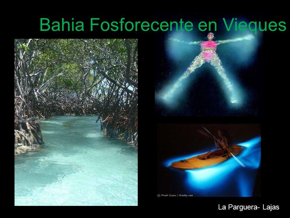 Bahia Fosforecente en Vieques