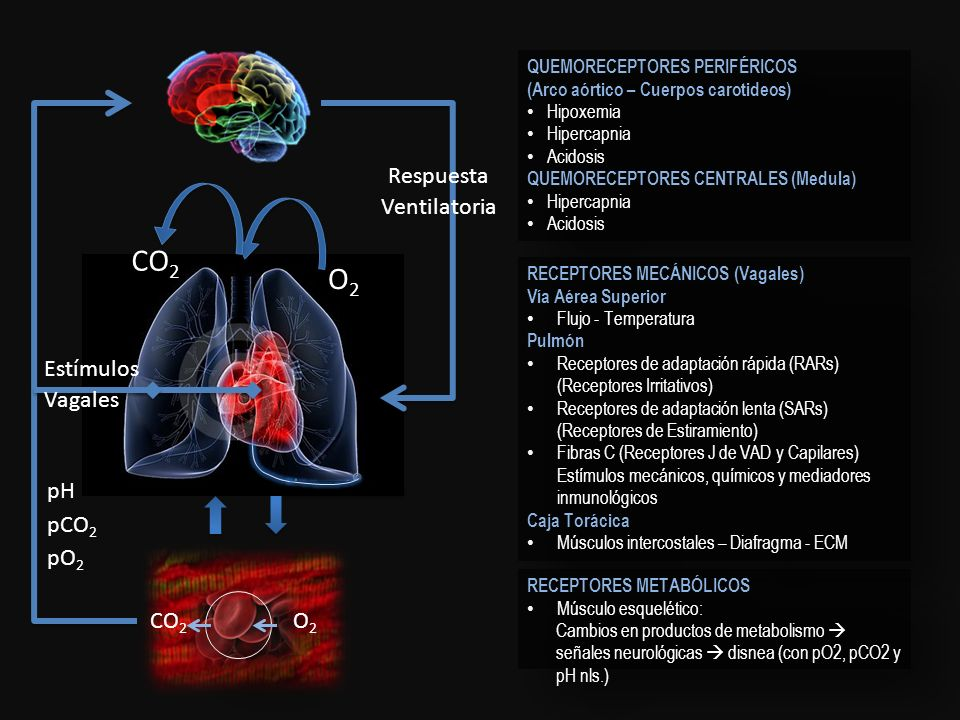 CO2 O2 pH pCO2 pO2 Respuesta Ventilatoria Estímulos Vagales O2 CO2