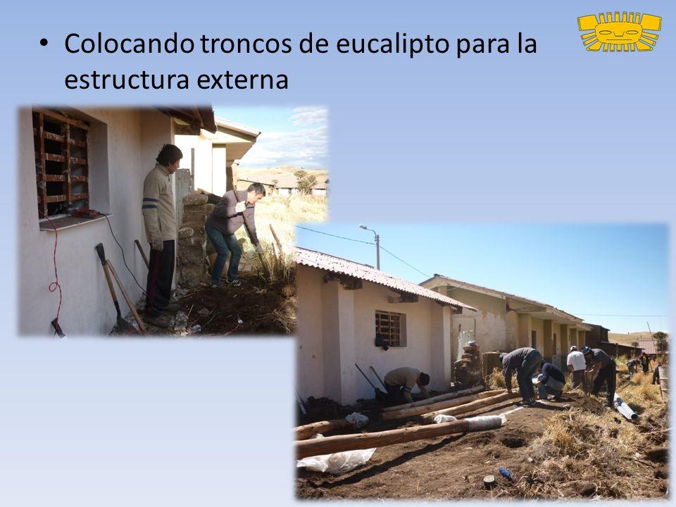 Colocando troncos de eucalipto para la estructura externa