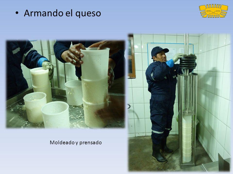 Armando el queso Moldeado y prensado
