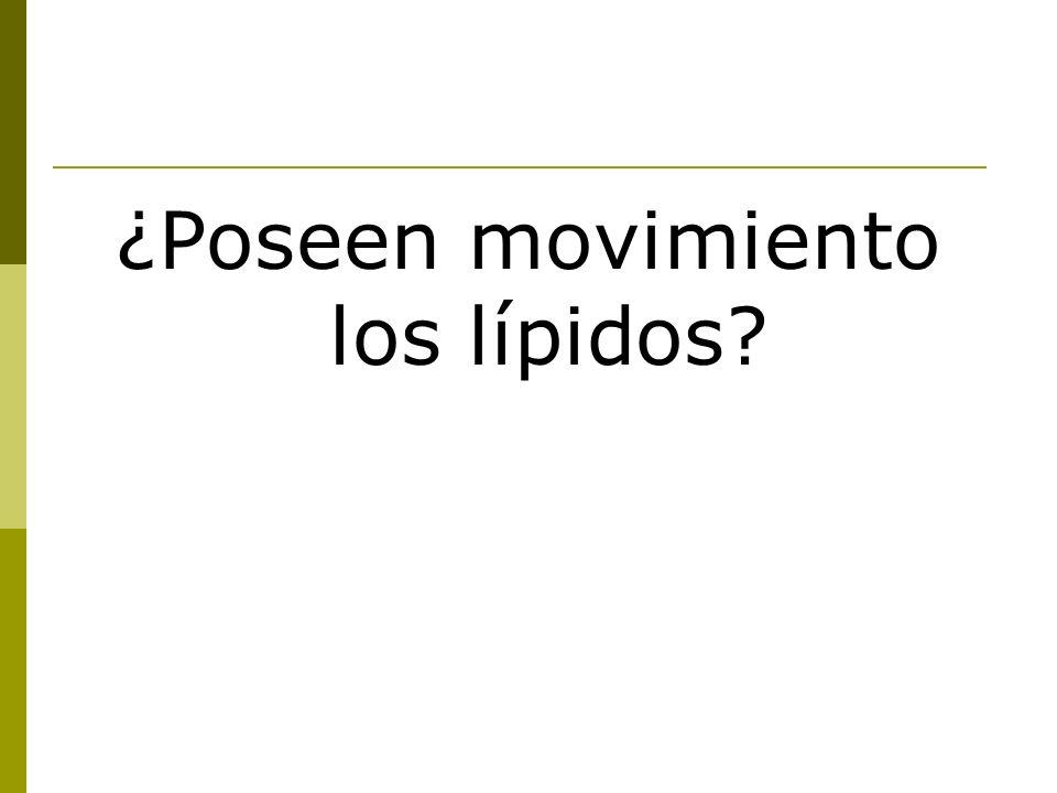 ¿Poseen movimiento los lípidos