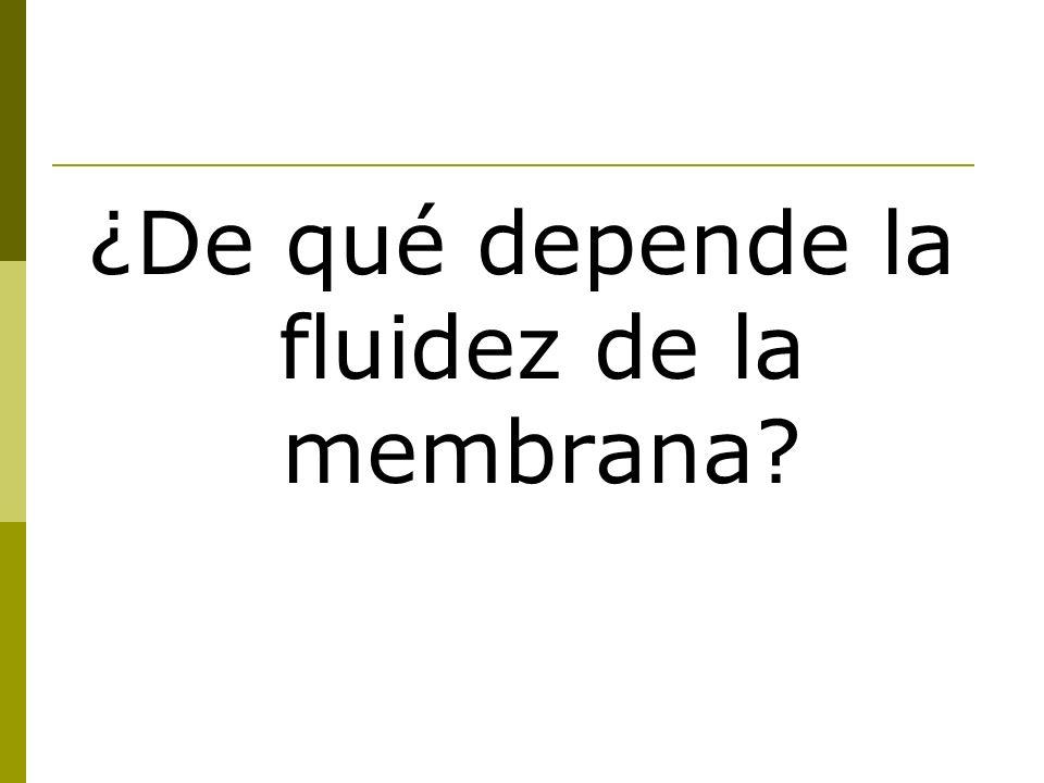 ¿De qué depende la fluidez de la membrana