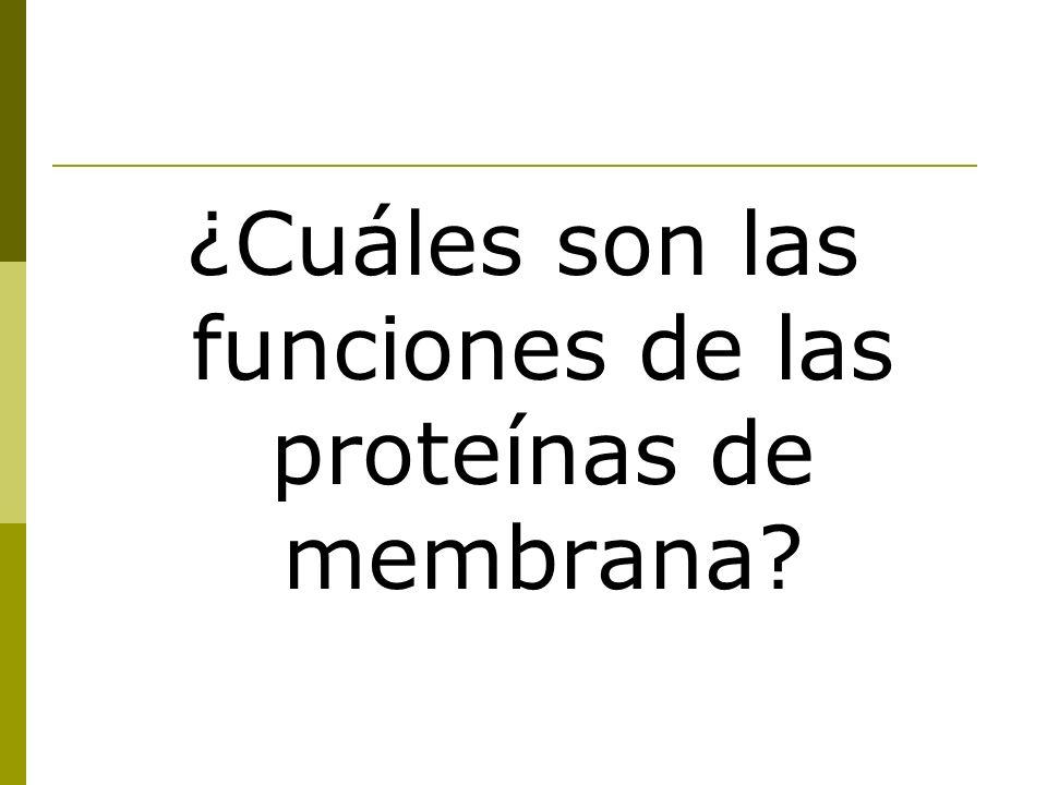 ¿Cuáles son las funciones de las proteínas de membrana