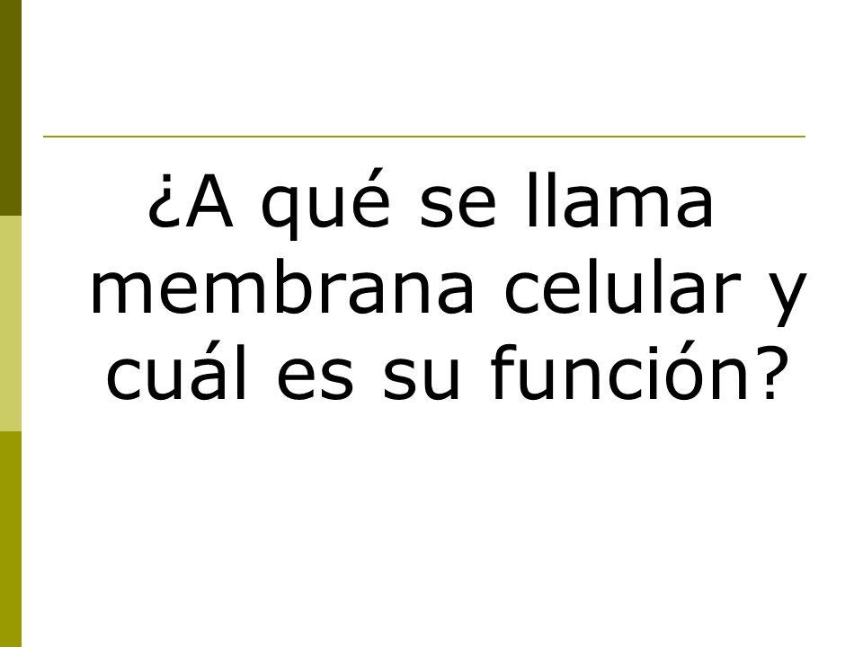 ¿A qué se llama membrana celular y cuál es su función