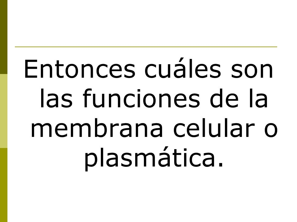Entonces cuáles son las funciones de la membrana celular o plasmática.