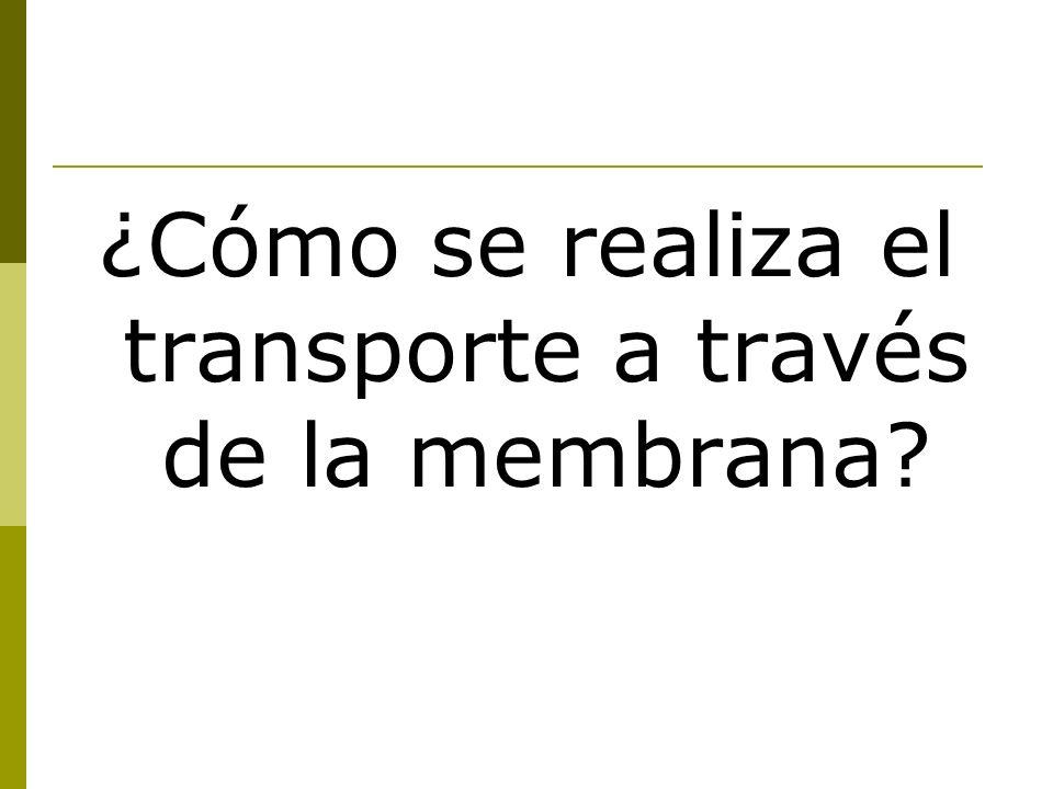 ¿Cómo se realiza el transporte a través de la membrana
