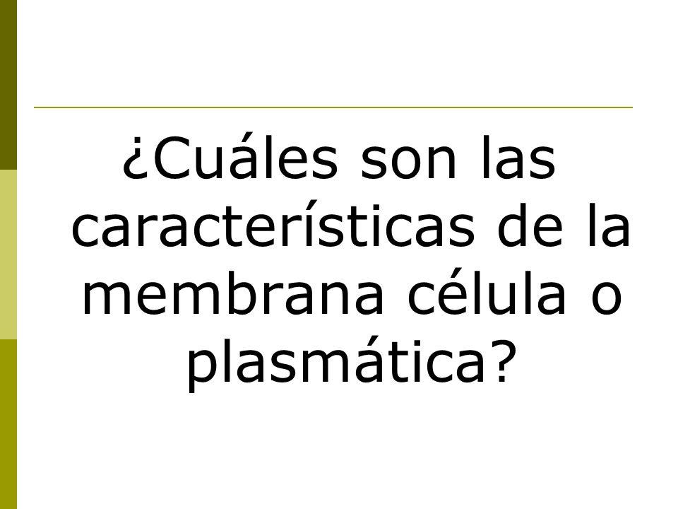 ¿Cuáles son las características de la membrana célula o plasmática