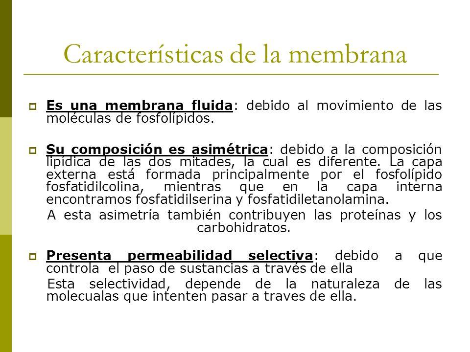 Características de la membrana