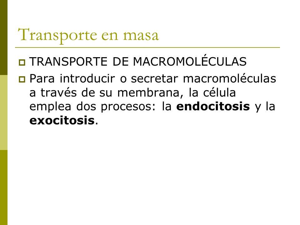 Transporte en masa TRANSPORTE DE MACROMOLÉCULAS