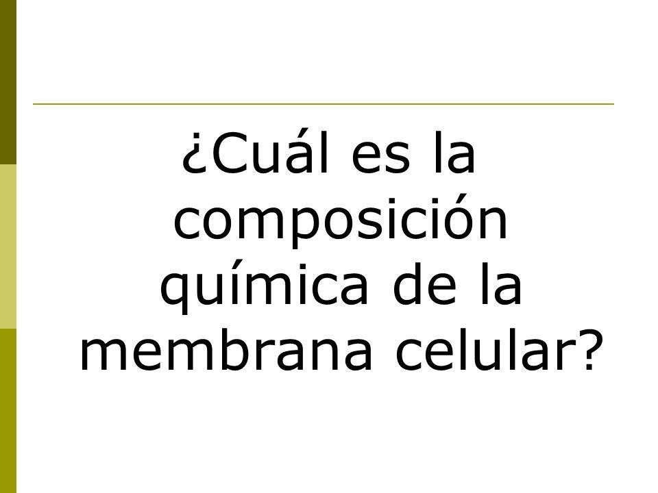 ¿Cuál es la composición química de la membrana celular