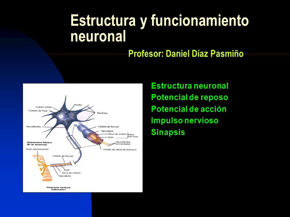 Estructura y funcionamiento neuronal Profesor: Daniel Díaz Pasmiño