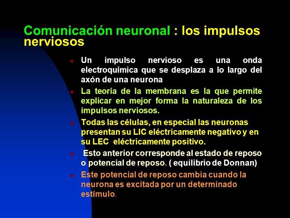 Comunicación neuronal : los impulsos nerviosos