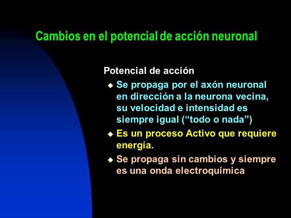 Cambios en el potencial de acción neuronal