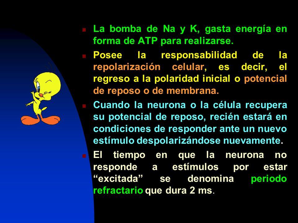 La bomba de Na y K, gasta energía en forma de ATP para realizarse.