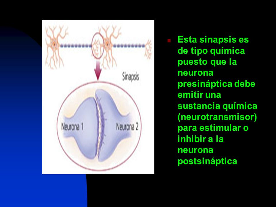Esta sinapsis es de tipo química puesto que la neurona presináptica debe emitir una sustancia química (neurotransmisor) para estimular o inhibir a la neurona postsináptica