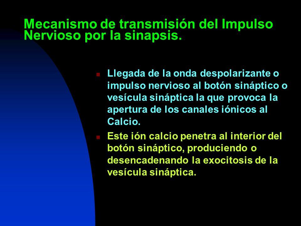 Mecanismo de transmisión del Impulso Nervioso por la sinapsis.