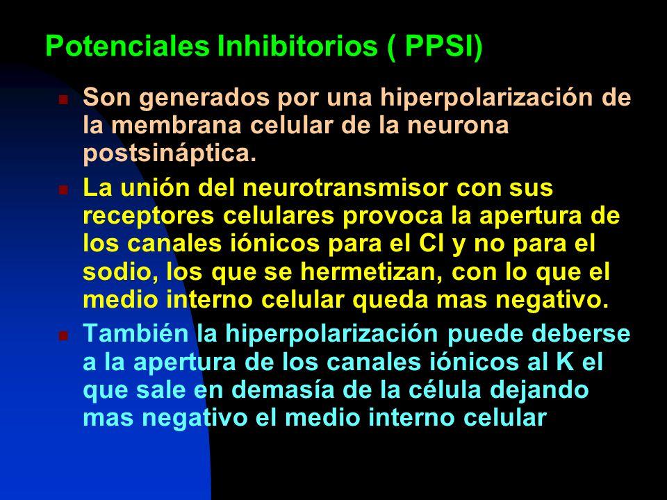 Potenciales Inhibitorios ( PPSI)