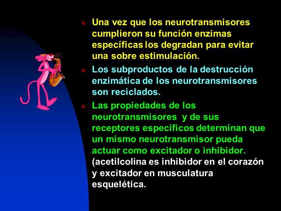 Una vez que los neurotransmisores cumplieron su función enzimas específicas los degradan para evitar una sobre estimulación.
