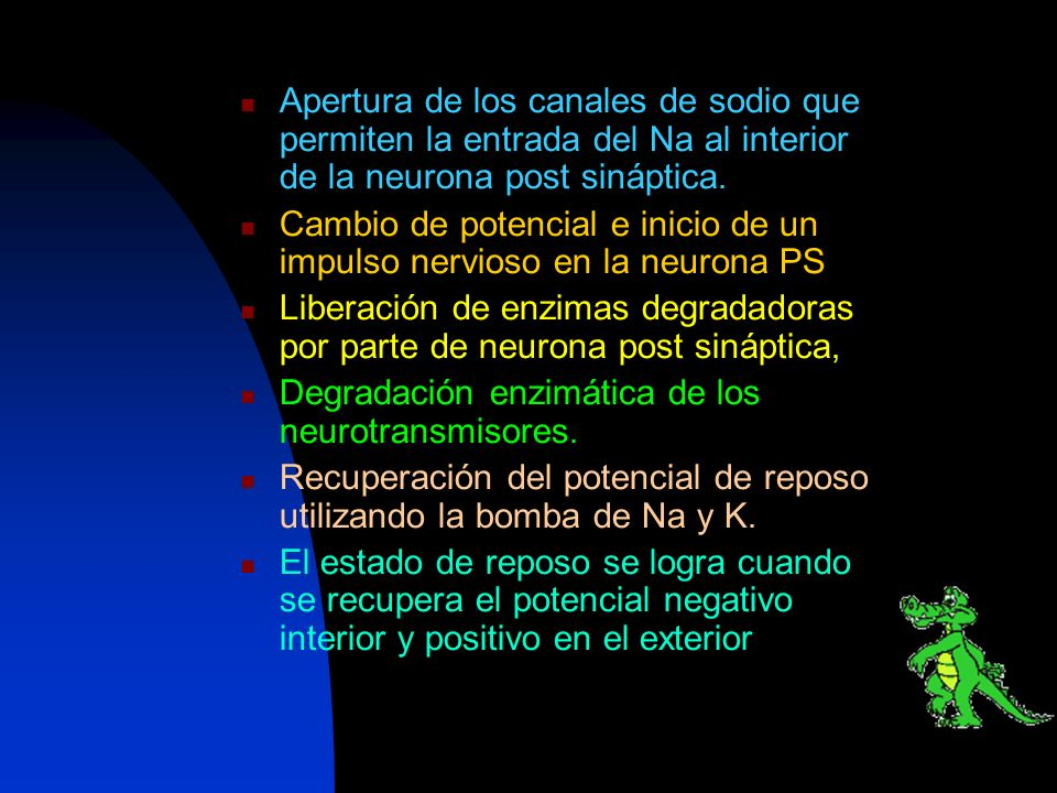 Apertura de los canales de sodio que permiten la entrada del Na al interior de la neurona post sináptica.