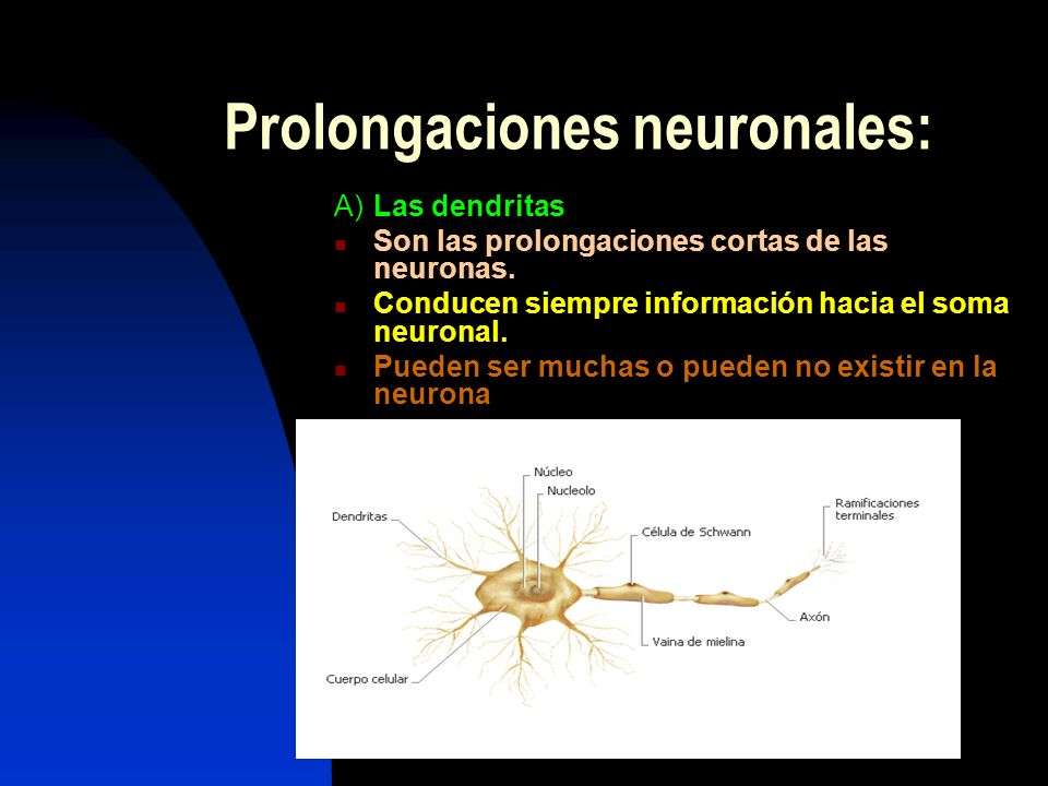 Prolongaciones neuronales: