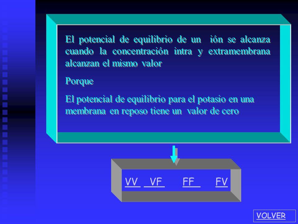 El potencial de equilibrio de un ión se alcanza cuando la concentración intra y extramembrana alcanzan el mismo valor