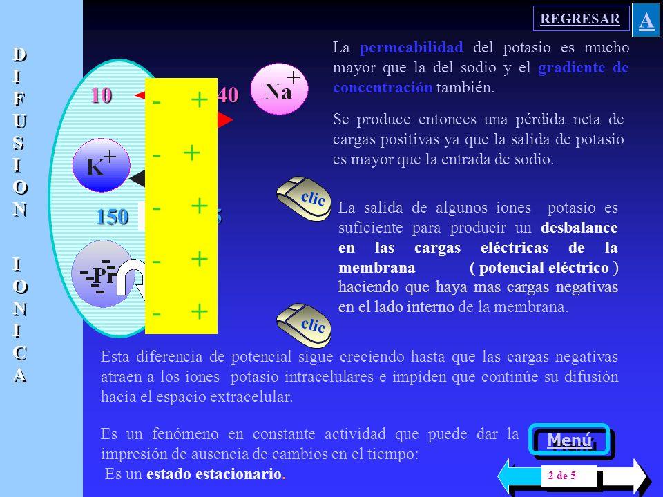 REGRESAR A. La permeabilidad del potasio es mucho mayor que la del sodio y el gradiente de concentración también.