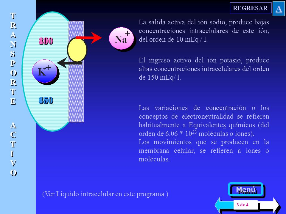 REGRESAR A. TRANSPORTE. ACTIVO. La salida activa del ión sodio, produce bajas concentraciones intracelulares de este ión, del orden de 10 mEq / l.