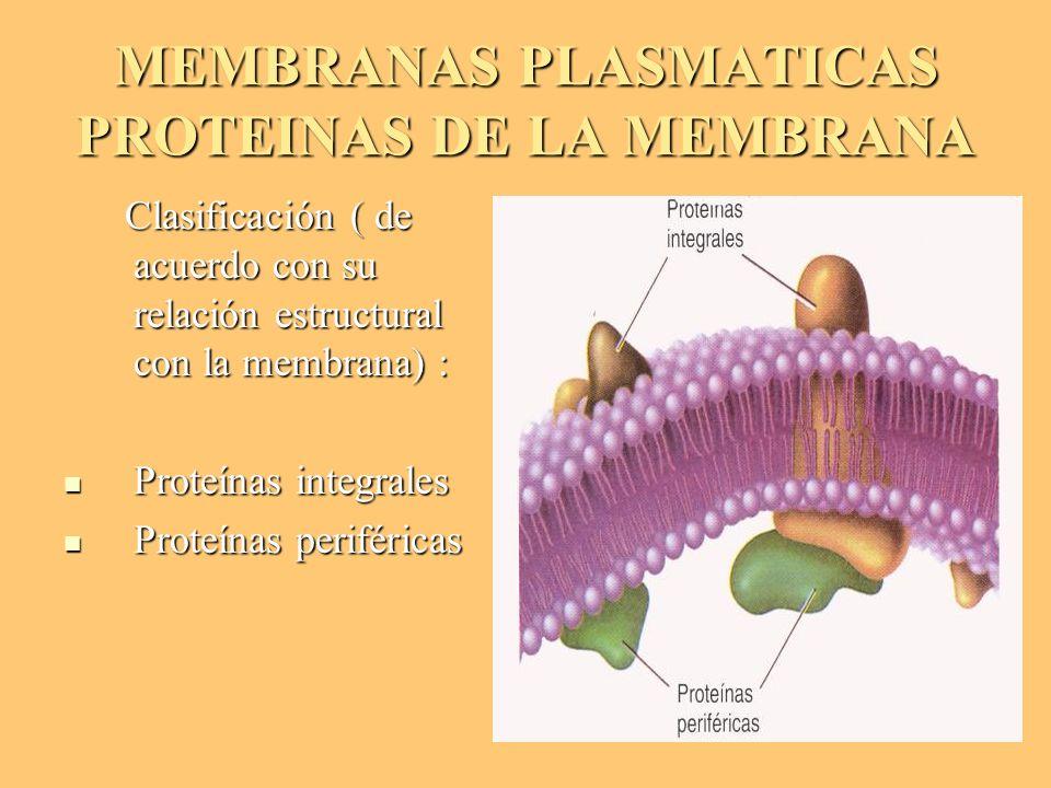 MEMBRANAS PLASMATICAS PROTEINAS DE LA MEMBRANA